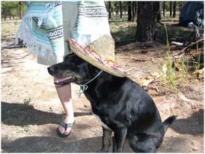 Fiesta Maggie
